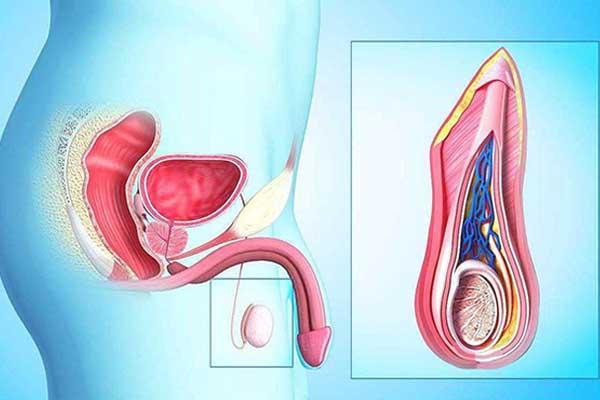 前列腺按摩如何操作
