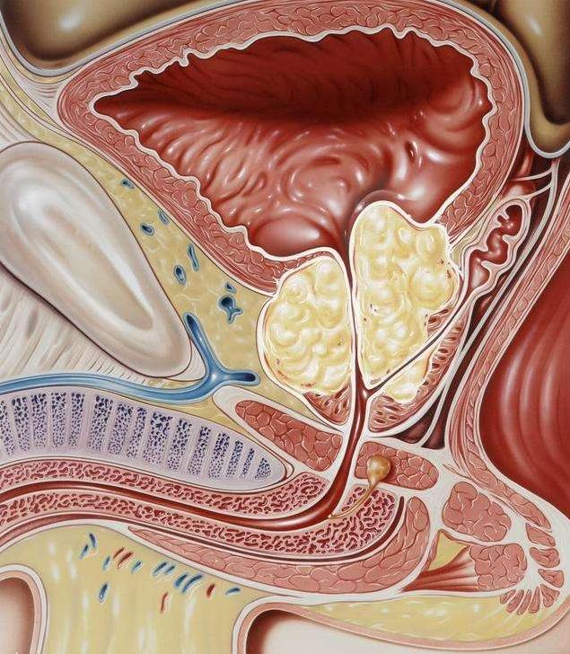 前列腺炎做B超在哪个部位做